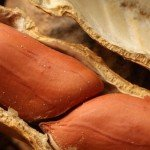 NC A&T attacks serious health threat with allergen-reduced peanut